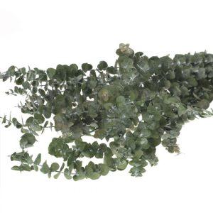 BabyEucapyptus