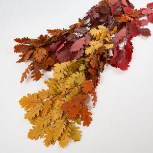 preserved oak